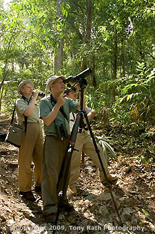 Birding in rainforest
